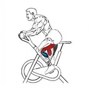 нее есть на какие мышцы влияет велотренажер картинки буду готовить ленивый